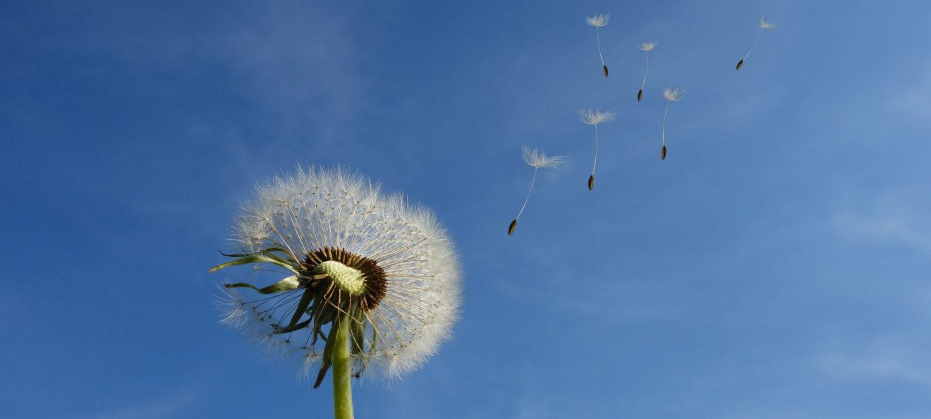 Prendre le temps d'écouter le vent